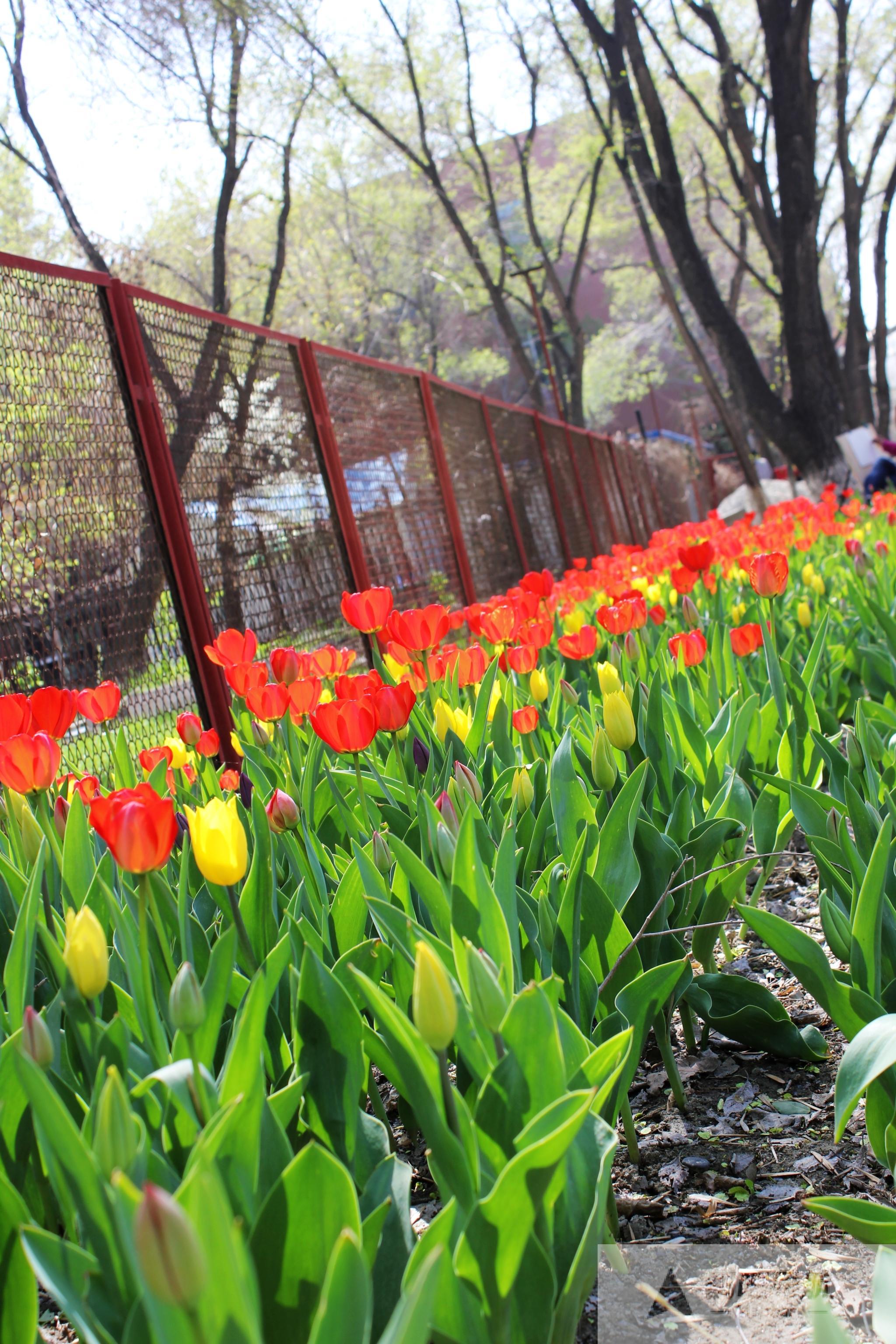 乌鲁木齐植物园