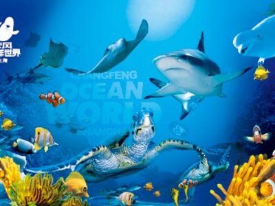 世界上最可爱的鲨鱼