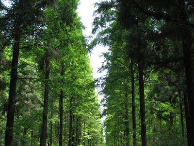 崇明岛中北部,面积358公顷,是华东地区最大的平原人造森林,这里也是